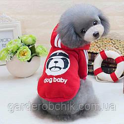 """Куртка, толстовка """"Dog Baby"""" для собаки, кошки. Одежда для животных."""