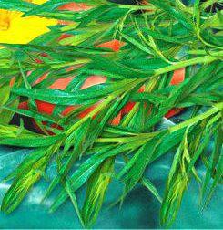 Семена Эстрагона  (имп), фото 2