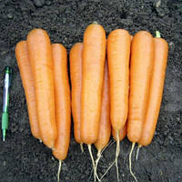 Аттилио F1 семена моркови нантской Vilmorin 10 000 семян