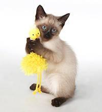 Іграшки для кішок і котів