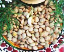 Семена Чечевици