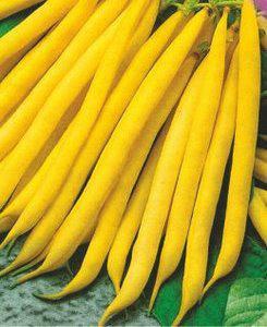 Семена фасоли спаржевой Сонеста, фото 2