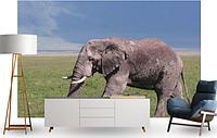 "3D фотообои ""Слон"""