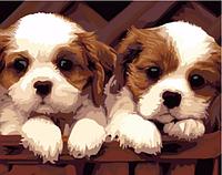 Картина для рисования по номерам, две собачки 40х50 см.