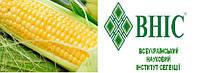 Насіння Кукурудзи Гран Амарок ВН