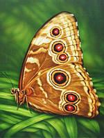 "Алмазная вышивка (набор) - ""Бабочка-монарх"", фото 1"