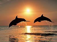 "Алмазная вышивка (набор) - ""Дельфины на закате"""