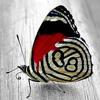 """Алмазная вышивка (набор) - """"Яркая бабочка"""", фото 1"""