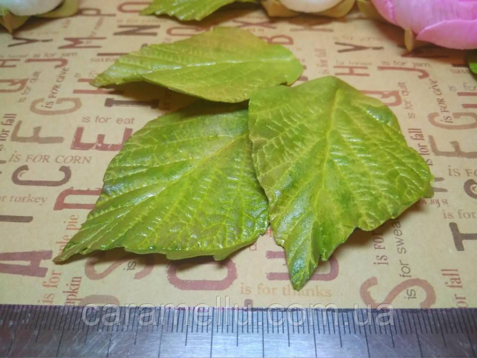 Лист розы.  5-6 см