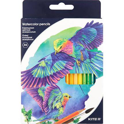 Карандаши цветные акварельные Kite K18-1052, 36 шт., фото 2
