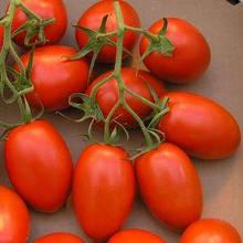 Насіння томату Діно F1 (1000 нас.) Clause