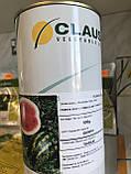 Семена арбуза КРЫМСОН СВИТ, 0, 5 кг, фото 3