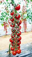 Семена томата черри МИНОПРИО F1, 250 семян