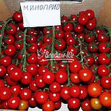 Семена томата черри МИНОПРИО F1, 250 семян, фото 6