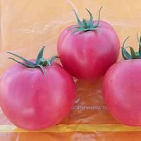 Семена томата Хапинет (Хеппинет) F1 (1000 сем.) Syngenta