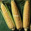 Семена сладкой ( сахарной ) кукурузы КАМБЕРЛЕНД F1, 5000 семян