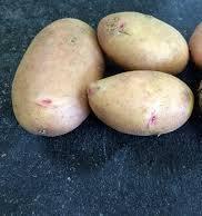 Картофель Аника, сетка~2,5кг