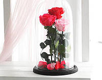 Три розы в стеклянной колбе Алый рубин Малиновый радолит Розовый жемчуг
