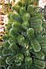 Ель искусственная на нитях зеленая 1.60 метра CLASSIC, фото 3