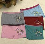 Детские трусики Собачки шортики хлопковые для девочки, фото 2