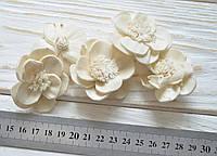 Сухоцвет цветок двойной 5шт (сухоцвет SHOLA), фото 1