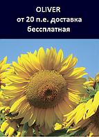 Семена подсолнечника OLIVER Экстра