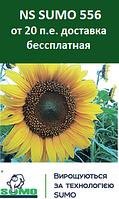 Семена подсолнечника NS SUMO 556 Стандарт