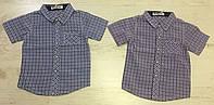 Рубашки на мальчика оптом, Buddy Boy, 1-5 лет,  № 5563, фото 1