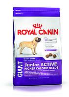 Royal Canin Giant junior active (Роял Канин для активных щенков собак очень крупных пород) 15 кг