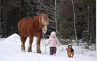 Покататься на лошадях в Харькове на выходные (список свободных часов)