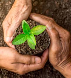 Средства Защиты Растений (СЗР)