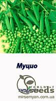"""Горох овощной """"Муцио""""  100 000 с  Syngenta"""