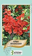 Айва японская  - 20 семян