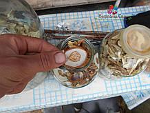 Шапка белого грыба сушеная