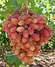 Подготовка места для посадки винограда