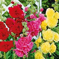 Семена Цветов пакетированные