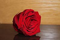 Стабилизированные розы: 5.5-6.5 см. Quality A+