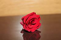Стабилизированные розы (мини 2.5-3.5 см)