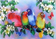Картина раскраска  Попугайчики  (7116)