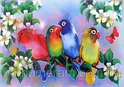 Картина раскраска Попугайчики (7116) 25 х 35 см (Без коробки)