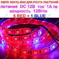 Фитолента для раcтений 5 красных + 1 синий smd 5050 для плодоношения