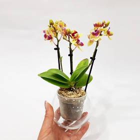 Кашпо для міні орхідей