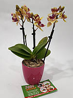 Кашподля мини Орхидеи «Матильда» 7*6 см