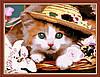Картина раскраска MENGLEI Котёнок в шляпе (MG177) 40 х 50 см