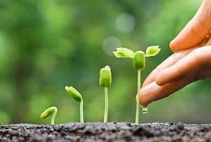 Як захистити посівний матеріал та забезпечити дружні сходи рослини