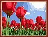 Картина по номерам MENGLEI Тюльпаны (MG215) 40 х 50 см