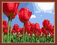 Картина по номерам MENGLEI Тюльпаны (MG215) 40 х 50 см, фото 1