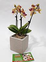 Кашпо керамическое для мини орхидеи К19.034.08