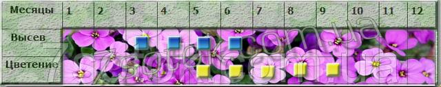 посев цветов