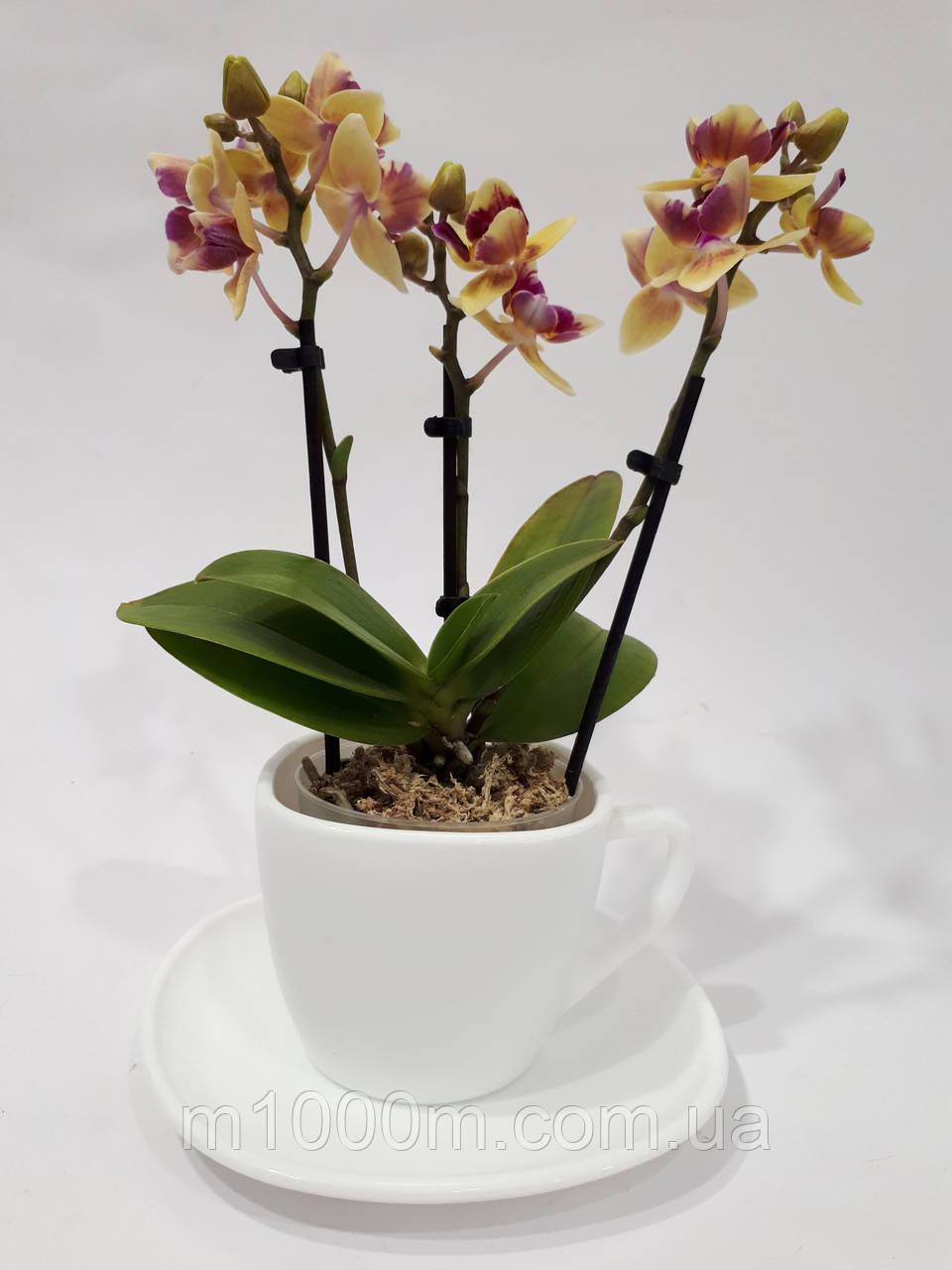 "Кашпо для мини Орхидеи ""Чашка"""